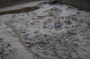Jinsha Archeological Site