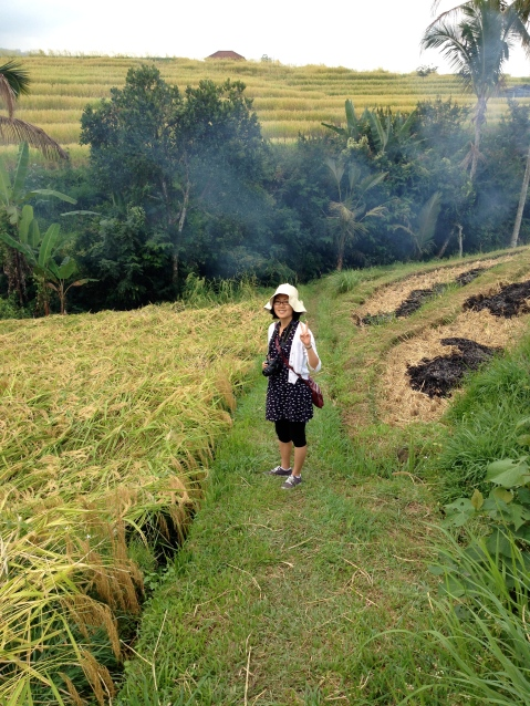 Walking along the rice fields