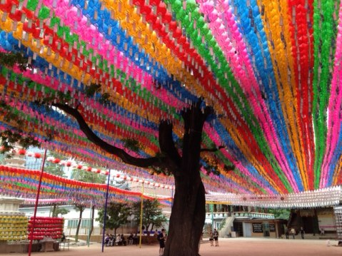 Jogyesa Temple tree with lanterns
