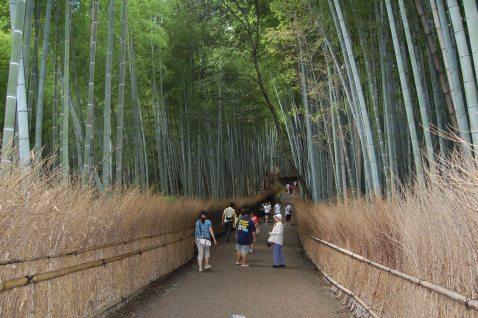 Arashiyama: bamboo forest