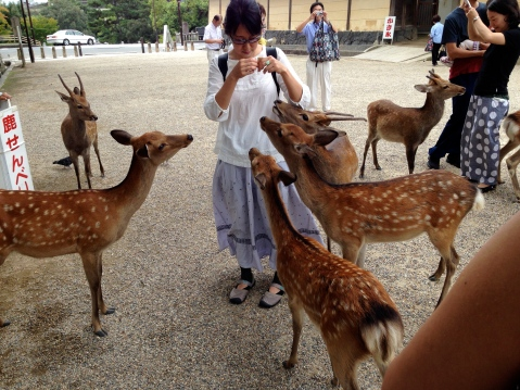 Woman Feeding Deer