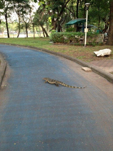 Why did the monitor lizard cross the street?