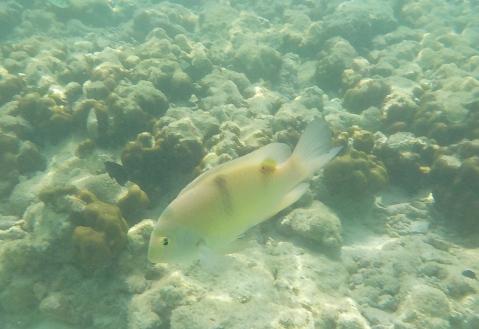 Colorful fish