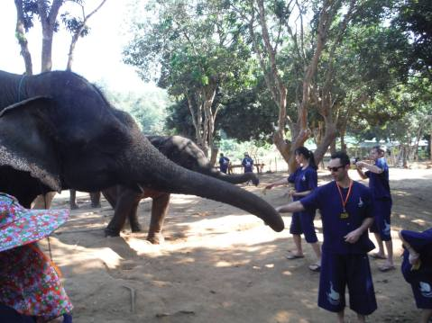 Alex feeding an elephant